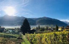 Gli interpreti del vino naturale in Valle d'Aosta