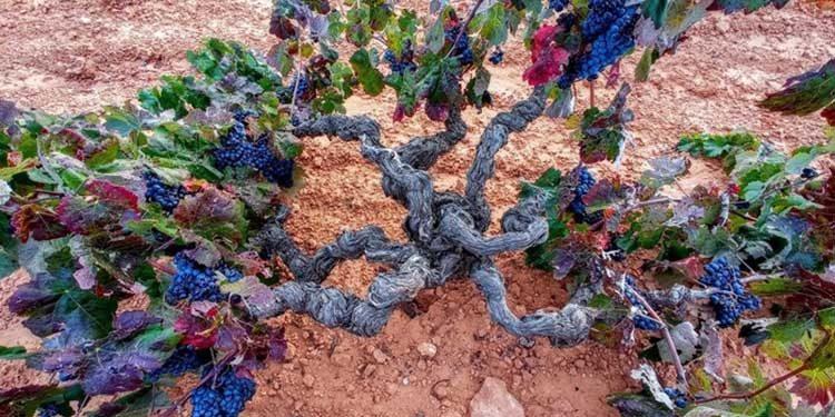 Come cambia il gusto del vino nella storia