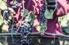 Gli altri spumanti: la Puglia brinda in rosé