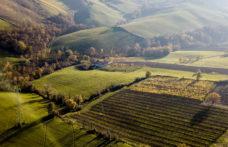 Gli interpreti del vino naturale in Emilia Romagna