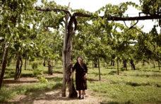 Feudi di San Gregorio ricerca i tesori nascosti dell'Irpinia