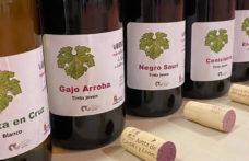 I vitigni dimenticati della Castilla y León