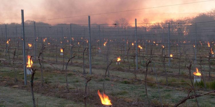 È un buon momento per il vino inglese