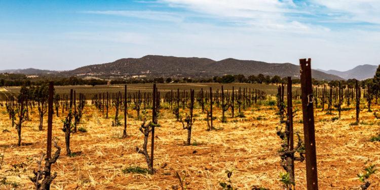 Adattarsi al nuovo clima: indicazioni per i produttori