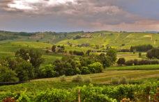 Gli interpreti del vino naturale nel Monferrato