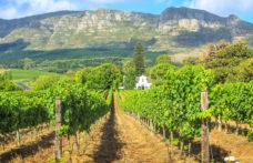 In Sudafrica proibita (di nuovo) la vendita di alcolici