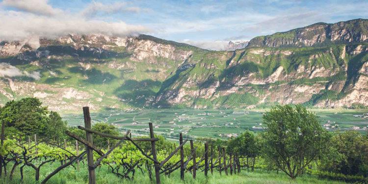 Il Trentino è Wine Region of the Year 2020 secondo Wine Enthusiast