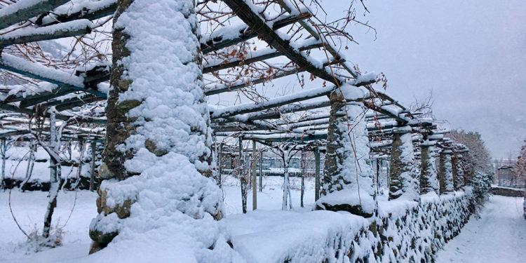 Gli interpreti del vino naturale nell'Alto Piemonte