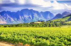 In Sudafrica si tornano a vendere alcolici. In Usa nessuna revisione sui dazi