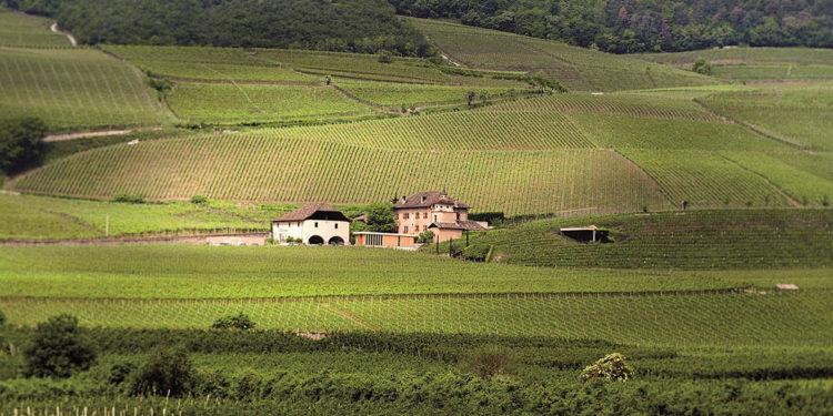 Gli interpreti del vino naturale in Alto Adige