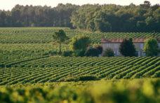 Sei nuove uve nelle Aoc di Bordeaux per affrontare il climate change