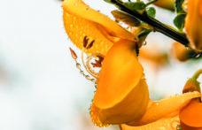 Resistenza! Capitolo 4: il fiore della battaglia dei vignaioli