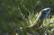 In tutta Europa cresce la voce di chi chiede lo stop ai pesticidi