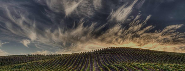 Wine Future 2021 | Vino e pandemia: i trend emergenti