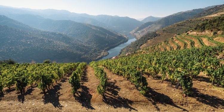 Wine trends: il Portogallo sorprenderà gli enoturisti, a cominciare dal Douro