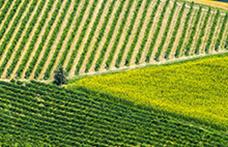 Gli interpreti del vino naturale nelle Marche