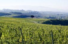 Rinnovata la certificazione VIVA a Lungarotti (che lancia bottiglie ecofriendly)