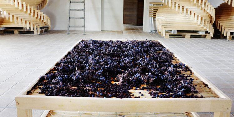 Gli interpreti del vino naturale in Umbria