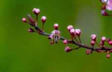 La biodiversità rende possibile l'amore. Parola di Jonathan Franzen