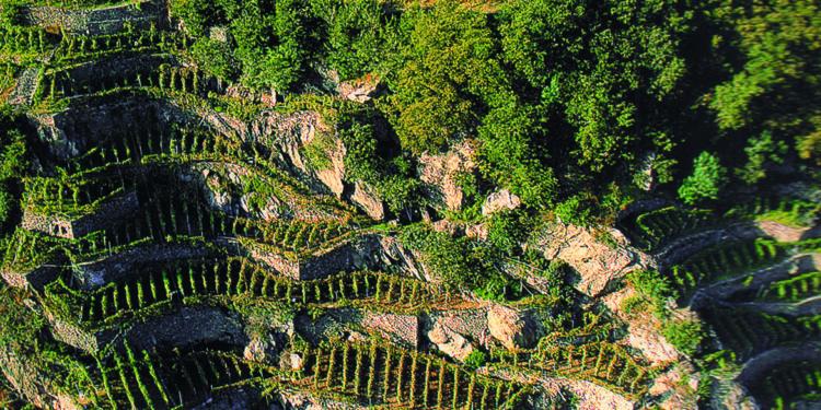 Zonazione: le aree vinicole più vocate in Valtellina, Oltrepò, Lugana e Valpolicella