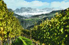 Maestri dell'eccellenza: Cantina Bolzano, produrre a due passi dalle cime innevate