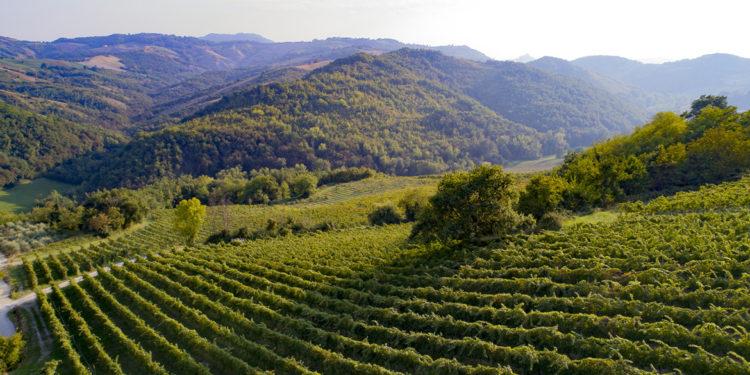 Barbaterre, la via emiliana al Pinot nero