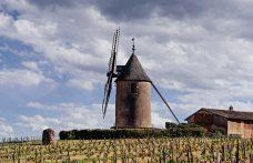 Cap Moulin-à-Vent, 13 produttori di Beaujolais insieme nel nome dei terroir