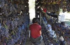 Gli interpreti del vino naturale in Toscana: dal Giglio a Massa Marittima