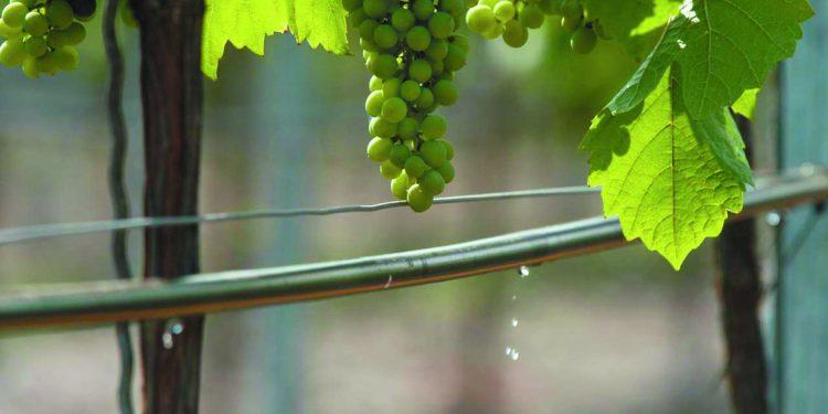 Acqua nel vigneto. L'irrigazione? Necessaria ma mirata