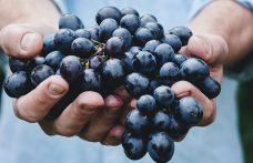 Tracciare il vino con la scienza e la tecnologia