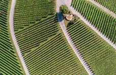 Rapporto AGRIcoltura100: quanto sono sostenibili le aziende italiane?