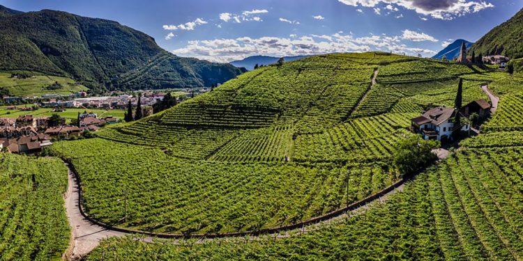 Assaggi d'alta quota. Il tasting dei vignaioli di montagna del Trentino e dell'Alto Adige