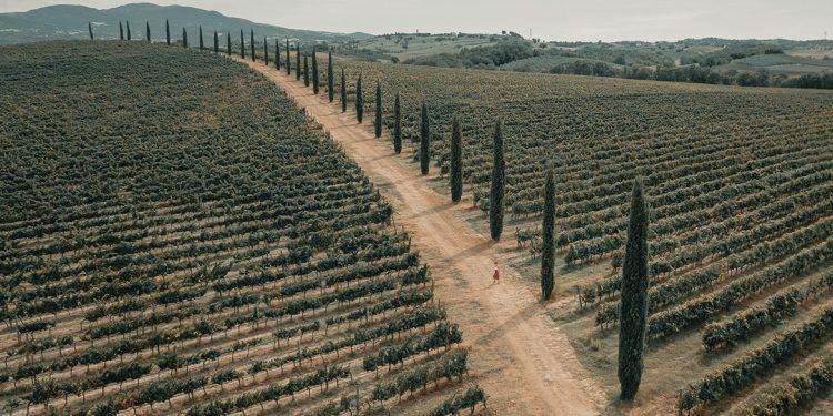 Vineyards, la nuova società che supporta nelle vendite e nelle acquisizioni