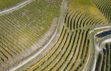 Censimento delle Vecchie Vigne: la Valle d'Aosta