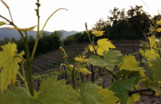 Gli interpreti del vino naturale in Basilicata
