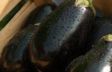 Melanzana, l'ortaggio della tradizione con cui sperimentare