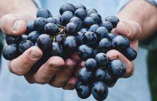 Siamo disposti a pagare di più per un vino biologico?