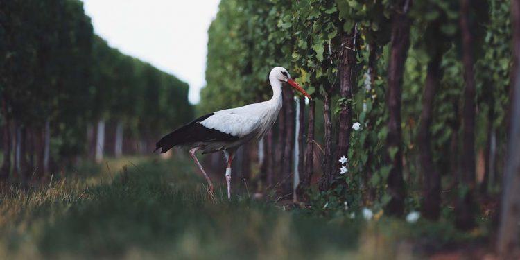"""Il vino """"giusto"""" secondo la Slow Wine Coalition"""