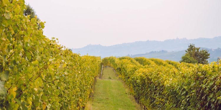 Liv-ex 2021: i vini italiani sono 83 (con un aumento del +112%)