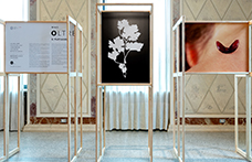 """""""Vino. Oltre il paesaggio"""", la mostra fotografica di Zenato Academy"""